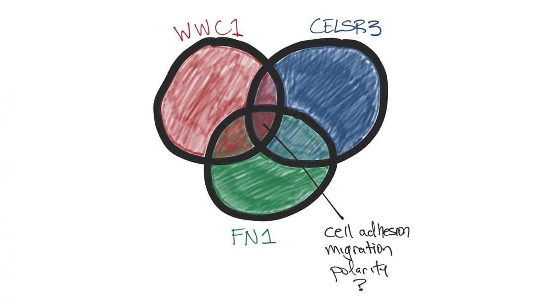 Illustration of genes